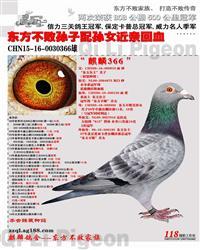 CHN15-16-0030366