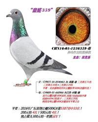 """魔姬359"""