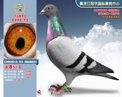 宏亚鸽舍 中信网铭鸽展厅 www.ag188.com