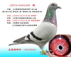 CHN16-10-0141849 雌