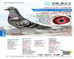 CHN2013-01-122293 雄