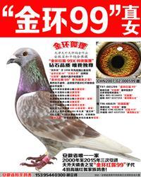 詹森红狐狸孙金环红狐99直女【金环狐狸】