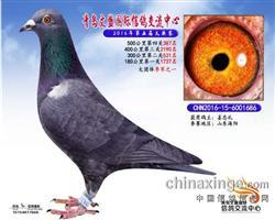 CHN2016-15-6001686