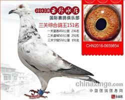 宸宇9854
