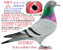 祺阳俱乐部.三关鸽王总冠军之母