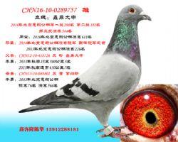 CHN16-10-0289757 雄