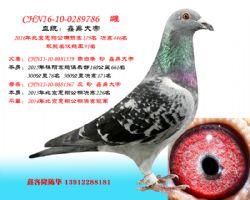 CHN16-10-0289786 雌