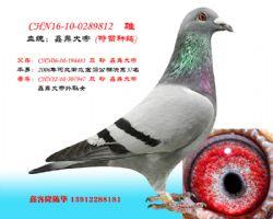 CHN16-10-0289812 雄