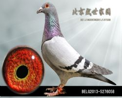 BELG2013-5276058