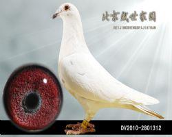 DV2010-2801312