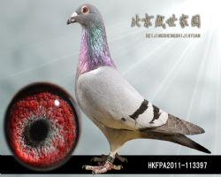 HKFPA2011-113397