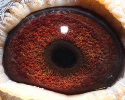 私环-179眼睛