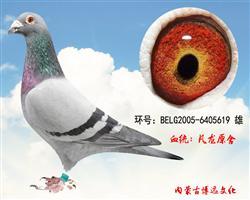 博远凡龙(非卖品)