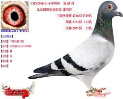 兰翔 22