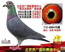 北京京广赛鸽公棚决赛季军