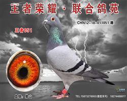 细川势山:王者051