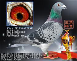 2016江苏省550公里联赛,南通市亚军