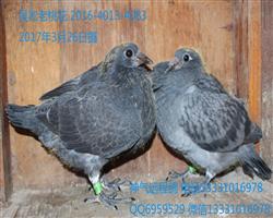 4013-83吴淞老桃花