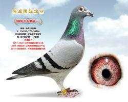 杨龚多拉斯4889