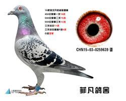 CHN15-03-0259639 雄副本