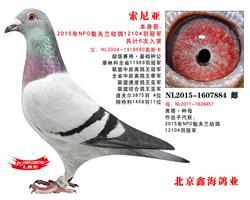 【索尼亚】魁夫兰12104羽冠军
