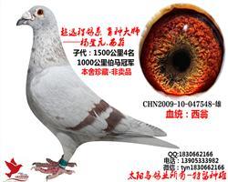 杨登元-西翁 超级种雄