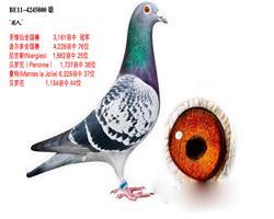 【雨人】圣维仙全国冠军国际季军