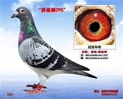 天宇英格斯-095-种雄