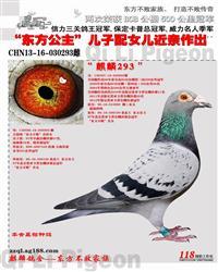 CHN13-16-030293