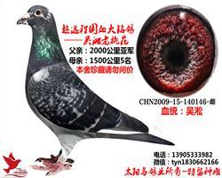吴淞老桃花 0146 超级种雌