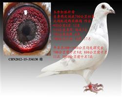 红狐金母130