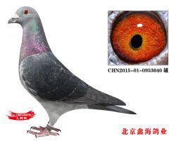 CHN2015-01-0953040 雄