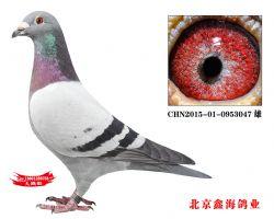 CHN2015-01-0953047 雄