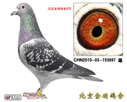 11 CHN2010-03-153897 雄