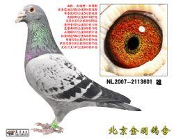 37 NL2007-2113601 雄