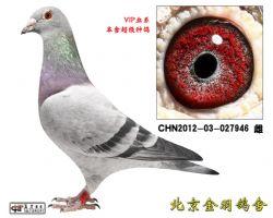 124 CHN2012-03-027946 雌