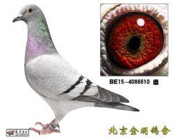 126 BE15-4086610 雌
