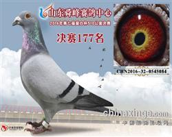 舜峰177