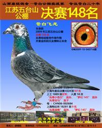 江苏五台山公棚决赛148名苍白飞龙