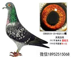 2012年2000公里第26名吴淞老国血