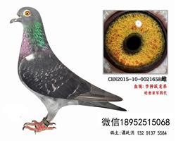 李鸟跃龙糸超远程老国血3