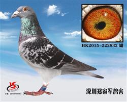 里奥黑鹰832