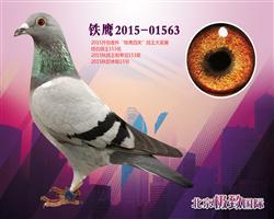 铁鹰2015-01563