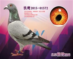 铁鹰2015-01572