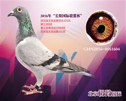 CHN2016-0561604