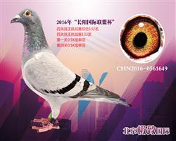 CHN2016-0561649