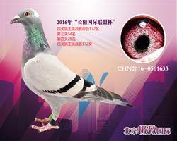 CHN2016-0561633