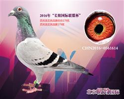 CHN2016-0561614