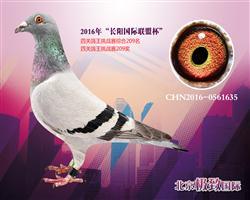 CHN2016-0561635