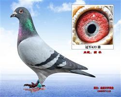 胡本-冠军633
